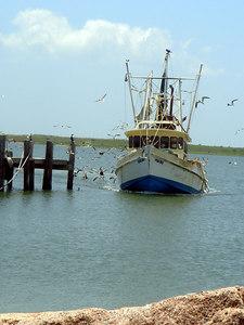 Landscapes_Galveston 0606 008