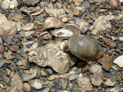 Landscapes_Galveston 0606 022