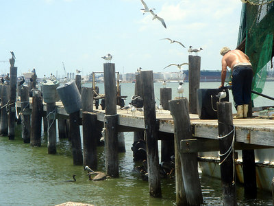 Landscapes_Galveston 0606 017