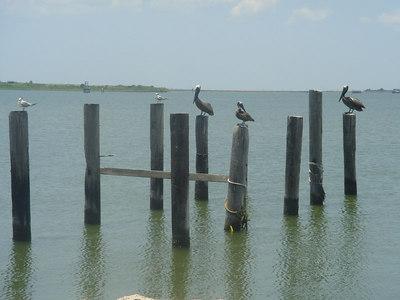 Lanscapes_Galveston 002