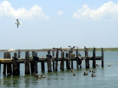 Landscapes_Galveston 0606 014