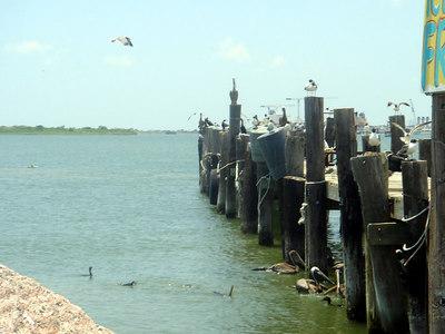Landscapes_Galveston 0606 016