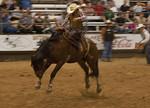 Bronco Needing To Be Shod -Pasadena Rodeo 2012