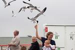 Hand Feeding The Galveston Ferry Gulls