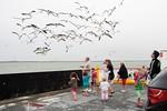 Watching The Galveston Ferry Gulls