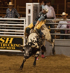 Wild Bull Ridin' - Pasadena Rodeo 2012