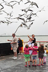 Feeding The Laughing Gulls From the Galveston Ferry