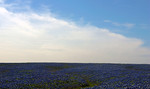 Texas Big Sky and Bluebonnets -Ennis, Texas, April 2012