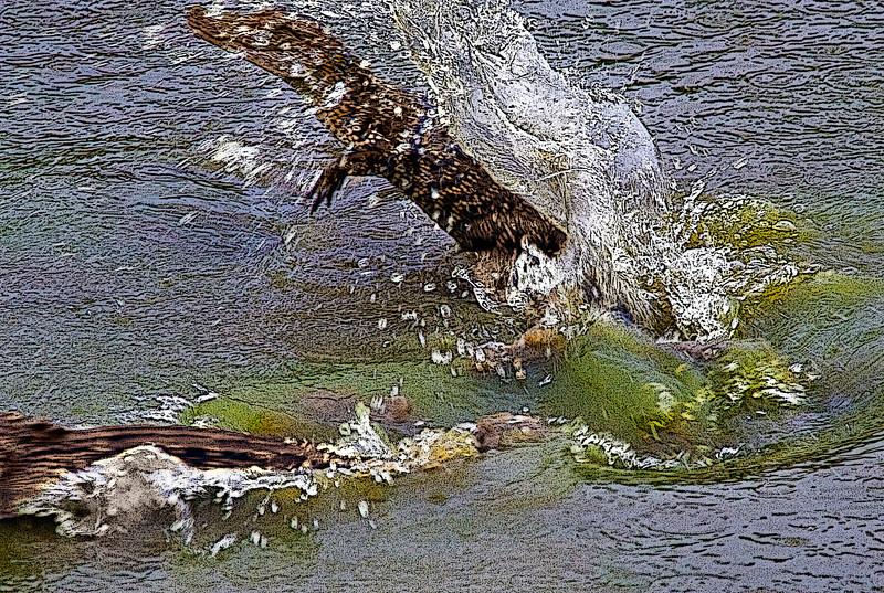 Jumping Alligators! Juvenile American Alligators, Smith Oaks Rookery, High Island, Texas 2011.