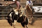 Carpal Injury Bronco -Pasadena Rodeo, Texas 2012
