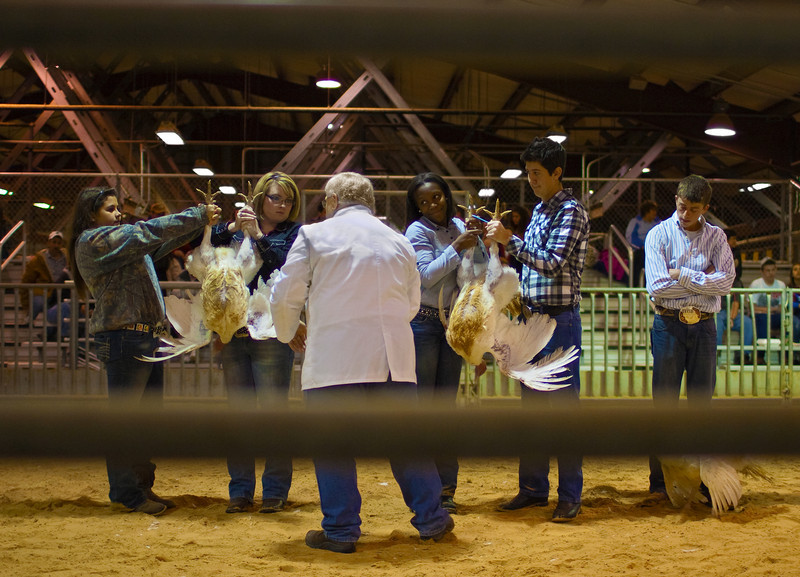 Future  Farmers Of America -The Turkey Competition -2011
