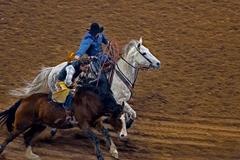 Runaway Bronco -Houston Livestock and Rodeo Show 2012