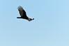 cranes-50