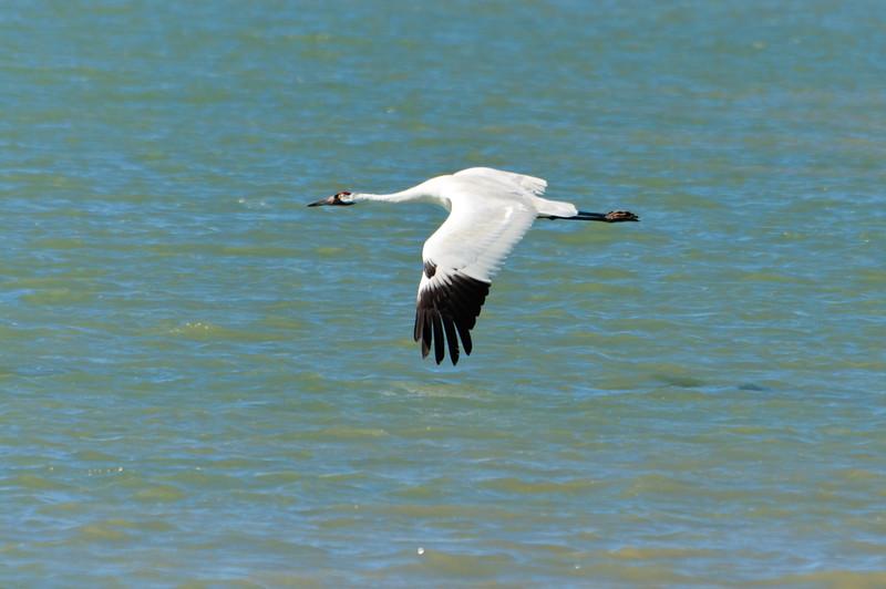 cranes-141