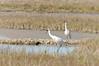 cranes-128