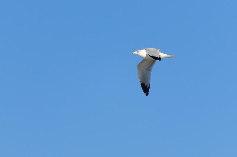 cranes-53