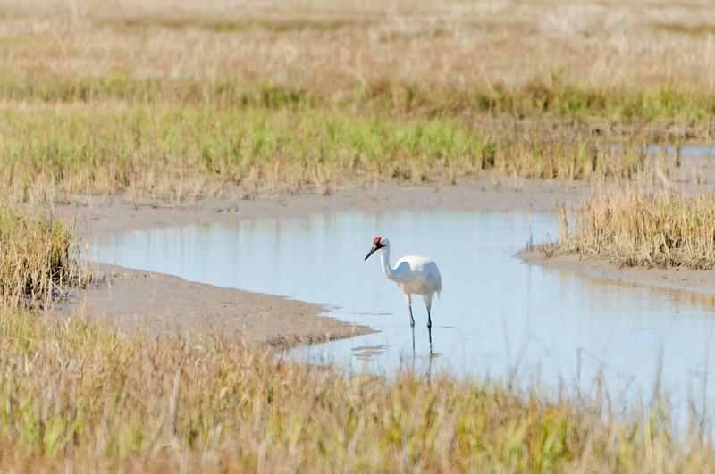 cranes-107