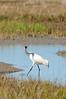 cranes-106