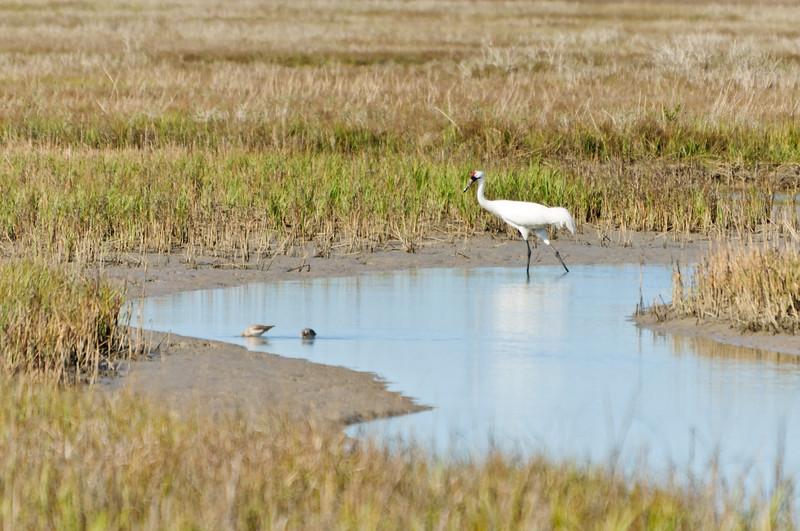 cranes-84