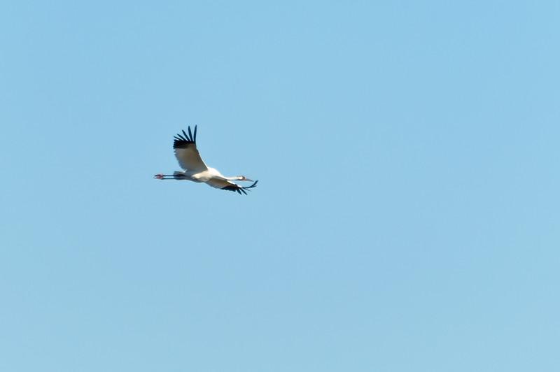 cranes-57