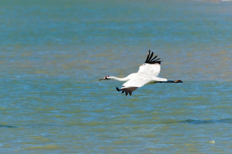 cranes-140