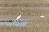 cranes-113