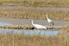 cranes-129