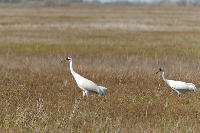 cranes-135