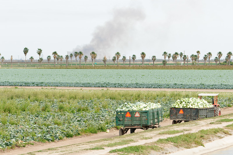 South Texas Agriculture.  Sugarcane Burning in the Background.