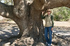 Maybe 500 Years Old...(The Tree!)