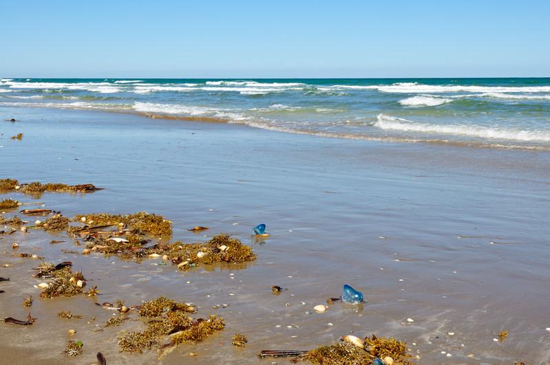 Jellyfish Washing up on Shore