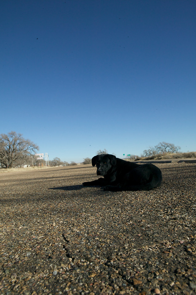 Glenrio, Texas. Roxann Travis is the last resident of Glenrio. This is her dog, taking a siesta in the middle of the old Route 66.