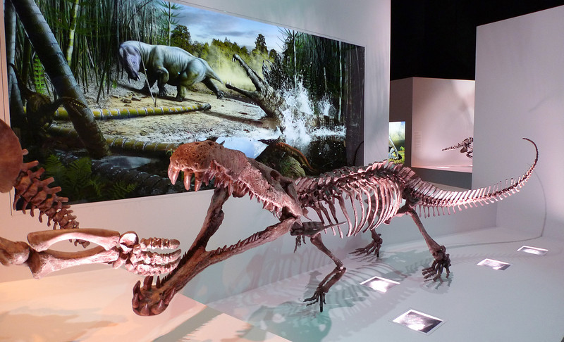 Smilosuchus<br /> <br /> Late Triassic<br /> <br /> Houston Museum of Natural Science