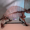 Edaphosaurus<br /> <br /> Houston Museum of Natural Science