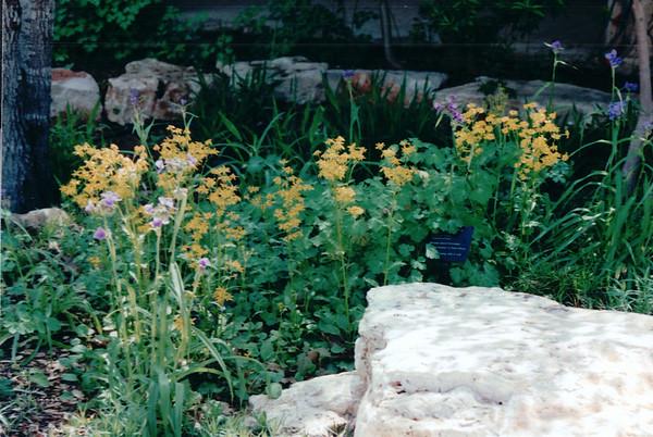 Austin, TX - Lady Bird Johnson Wildflower Center