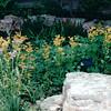 Native Plants - Lady Bird Johnson Wildflower Center, Austin, TX  3-9-00
