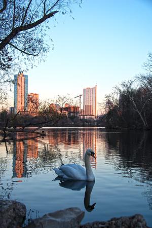 Downtown Skyline of Austin, Texas - Professional Skyline Photography - Lou Neff Point - Zilker Park - Sunset