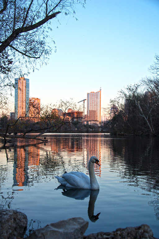Downtown Skyline of Austin, Texas - Professional Skyline Photography - Lou Neff Point - Zilker Park - Sunset