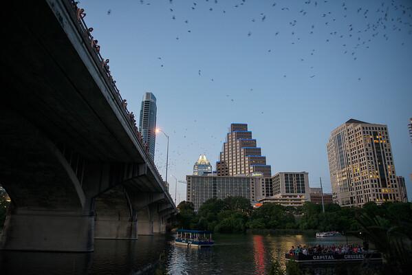 Bats at Sunset - Congress Street Bridge - Downtown - Austin - Texas - USA