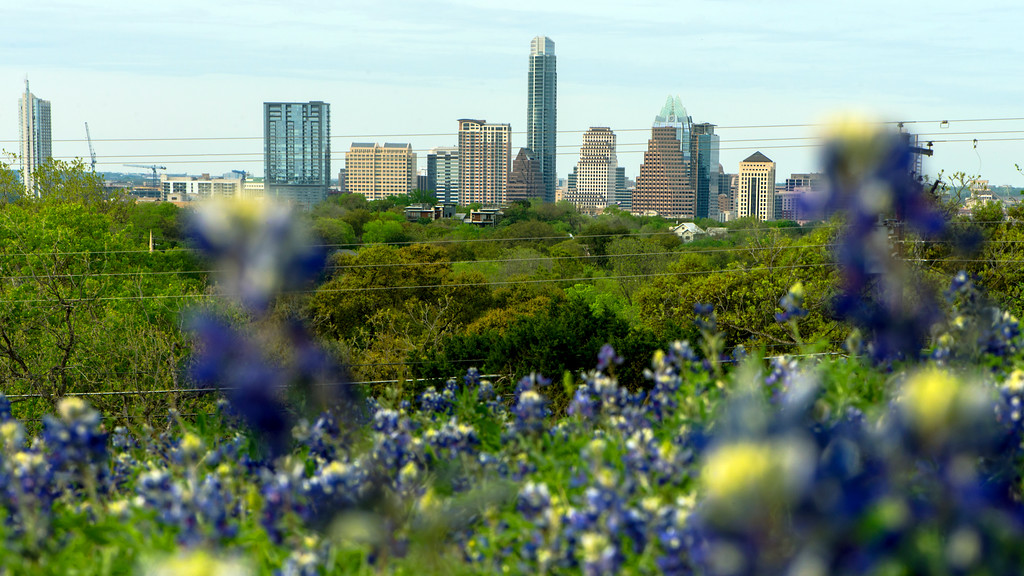Downtown Skyline of Austin, Texas in the Bluebonnets - Professional Skyline Photography