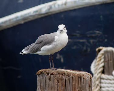 Seagull on the Docks