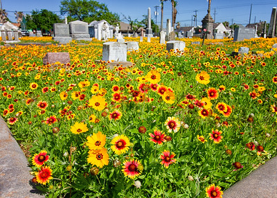 Blooms at Broadway Cemetery