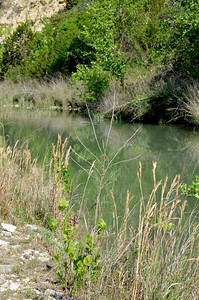 This is the catfish pond that is created by a cement dam which is part of the road that gets us to the hill at the back of the ranch.