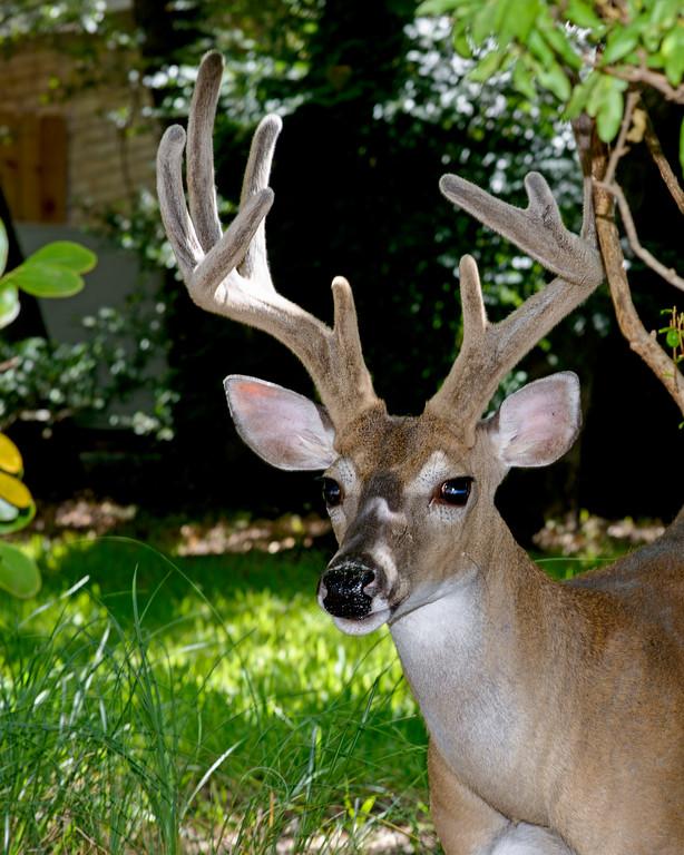 Neighborhood Buck