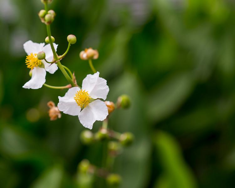 White flowers near a pond