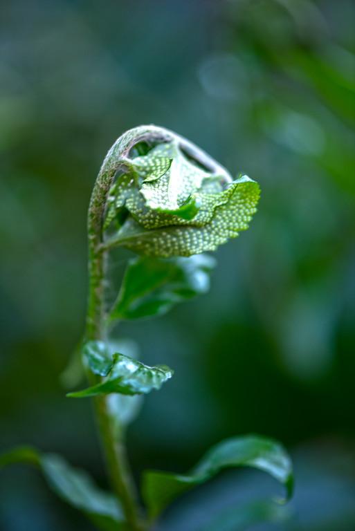 Frond - Professional Floral Photography - Austin, Texas - Macro Photography - Zilker Botanical Gardens