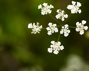 White flowers and little bugs - Professional Floral Photography - Austin, Texas - Macro Photography
