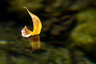Autumn leaf in a creek