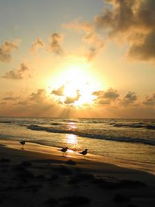 Galveston Sun Rays