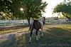 Race Horses  013